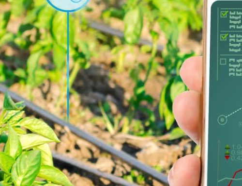 Case Study: Innovation in der Landwirtschaft und im Agrarhandel